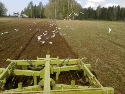 Taget genom traktorns bakruta, därav lite suddigt. Dessutom är måsarna kvicka rackare...