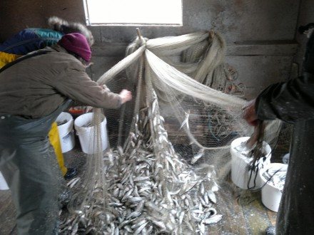 Strömminsfiske