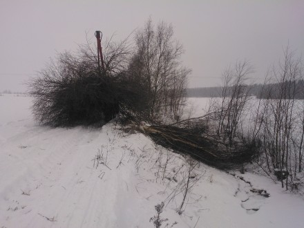 Som synes är det lite snö i ån och isen håller också att gå på så nu passar det bra att ta hand om slänterna.