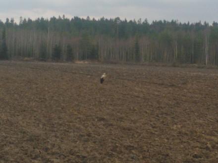 Ensam och bortkommen fågel....