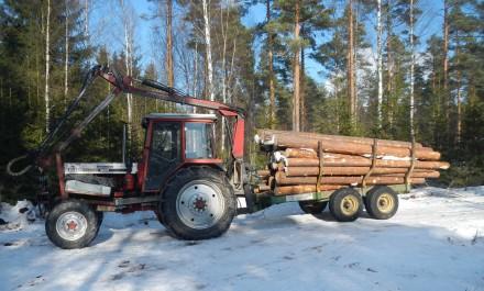 belarus_skogen_DSCN2225