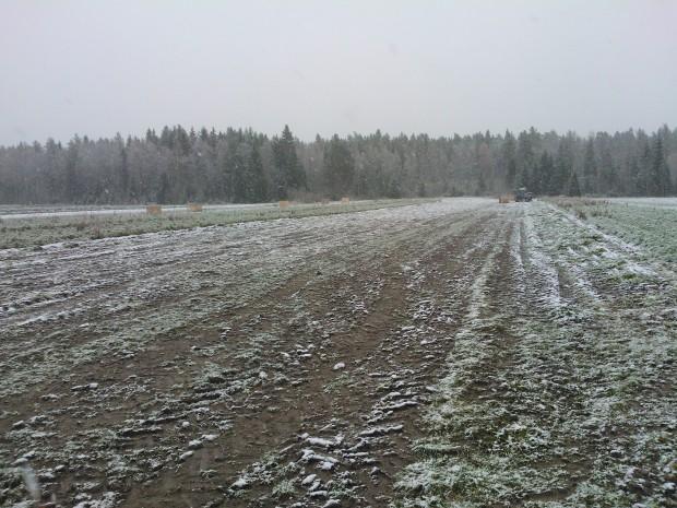 Natten till torsdag 17 oktober kom den första snön, med facit i hand borde vi nog skördat vidare men......