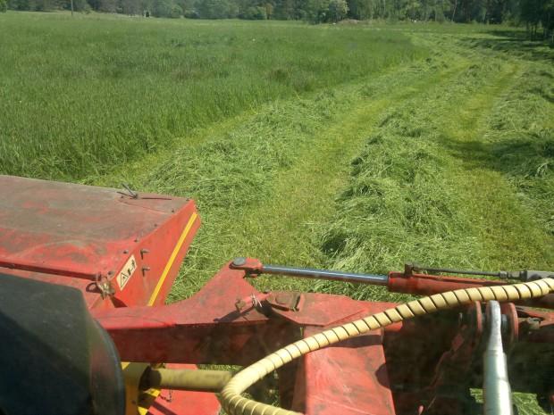Slår gräs
