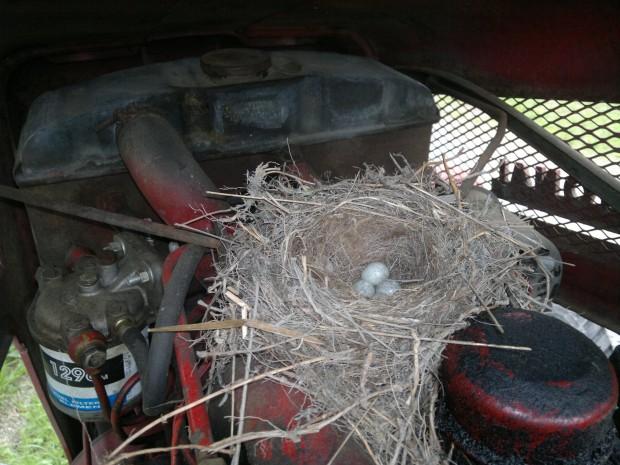 Ägg i traktor