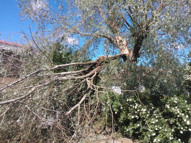Det blir antagligen till att korta ner de kvarvarande grenarna också för att undvika ytterligare skador.