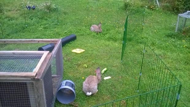 Kaninerna