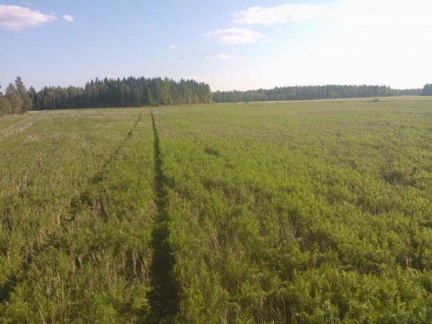 Langmosskiftets kummin 13.9. då beslut togs att spara växtligheten till våren.