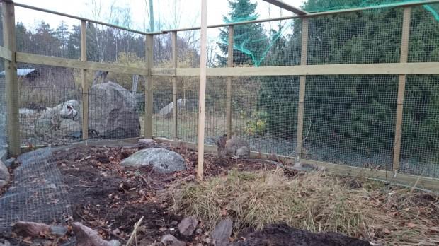 Hagen snart färdig, fattas lite sten kring kanterna där nätet ligger öppet på marken.