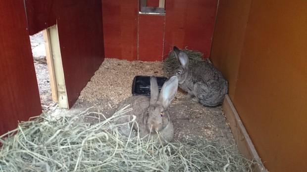 Kaninhuset