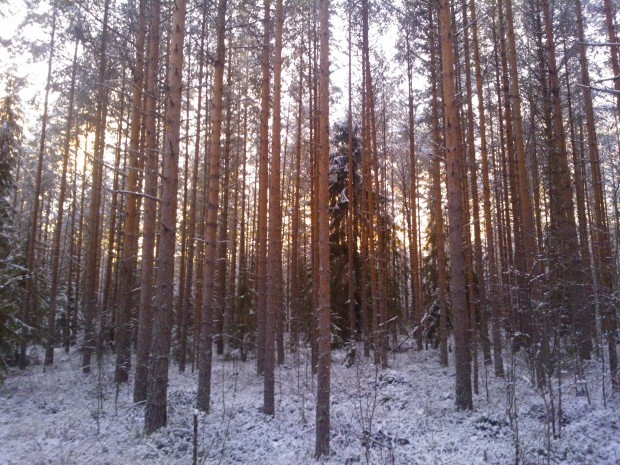 Ett vackert ljus som förebådar en ny vår silar genom skogen. Visst är det vackert även om bilden även påtalar att det börjar bli dags att starta motorsågen.