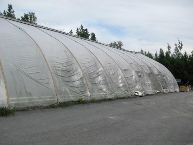 Växthusets plast smalt av värmen men tack vare att vinden låg på från växthuset klarade det sig från totalförstörelse.