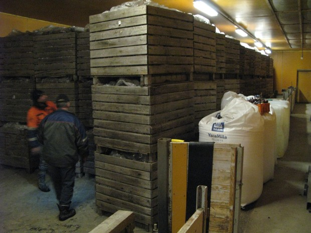 Ett tomt svinhus i grannbyn fick fungera som lager för det som vi inte fick sålt direkt från åkern. Tack vare stabilt kall vinter fungerade lagringen hyffsat.