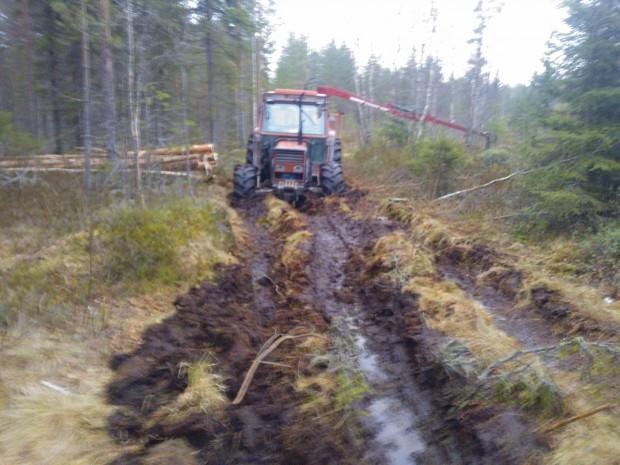 6.3.2014. Denna bild får beskriva skogsföret vintern 2014.