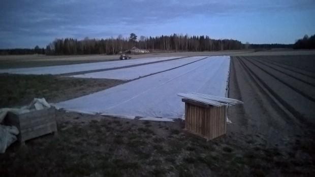 Täckväven läggs på inte bara för att skydda för frost och för att få snabbare skörd i och med högre temperaturer under täcket. Den hjälper också till att hålla den bionedbrytbara plasten på plats tills plantorna blivit större.