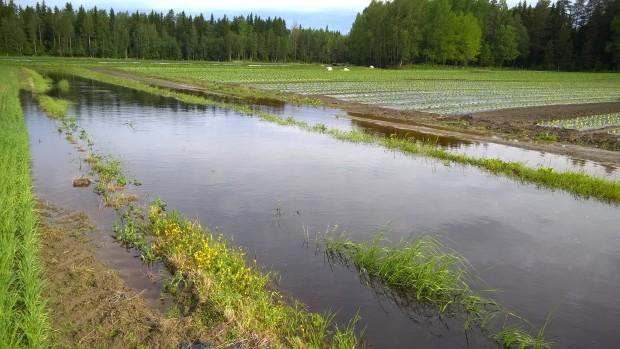 Så här såg det ut i morse på den plats kamerateamet gjorde intervjun i tisdags. Det var nära att odlingarna skulle översvämmats.