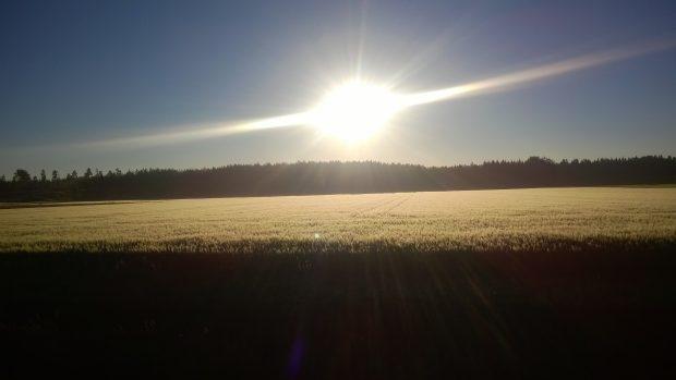 18.07.2016 kl6:00. Visst är det vackert så här i morgonljuset. :)